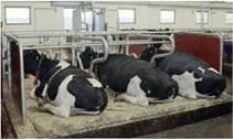 Утеплені приміщення для утримання тварин