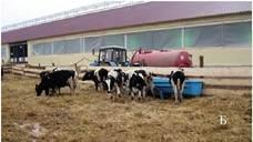 Напування тварин на вигульно-кормовому майданчику
