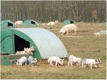Утримання підсисних маток у літніх таборах