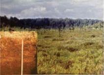 Верхове болото і верховий торф