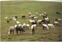 Табунне утримання коней