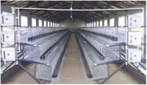 Каскадні кліткові батареї для утримання кролів